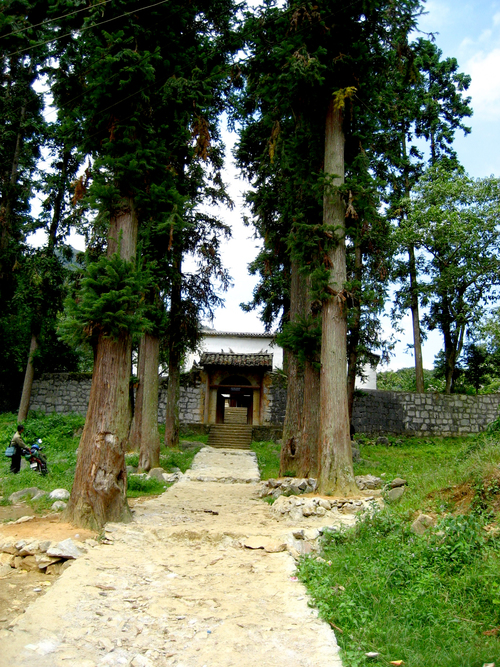 Towering pines guard the entrance to the palace in the Sa Phin Valley.