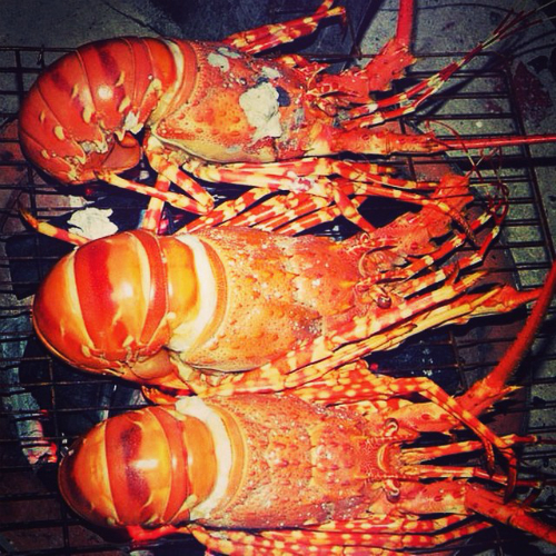 lobster-guide-claws-converge-on-five-islands-2