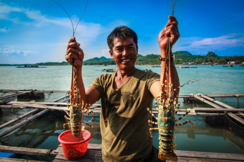 lobster-guide-claws-converge-on-five-islands
